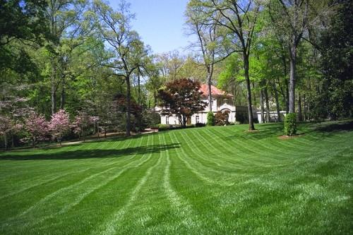 Lawn-Photo5