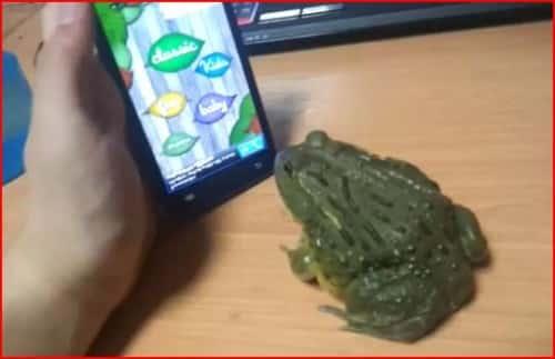 frog playing game