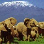 Kilimanjaro_National_Park