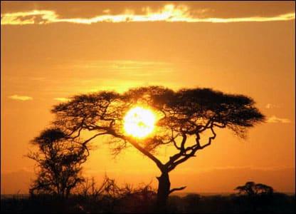 SerengetiSunriseAcaciaTree