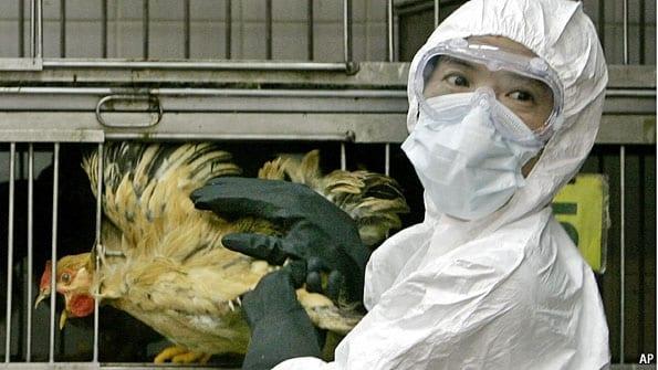 bird flu controversy