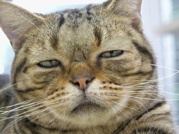 unhappycat