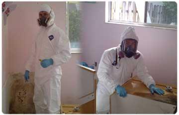 Mold Inspection Restoration1